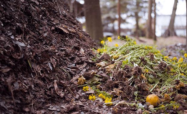 composting pile photo