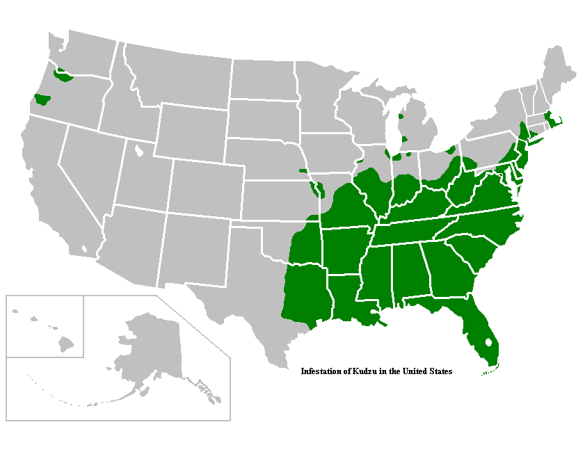 Map Of Kudzu In Us Kudzu: Invasive Plant That Took Over the Southern United States