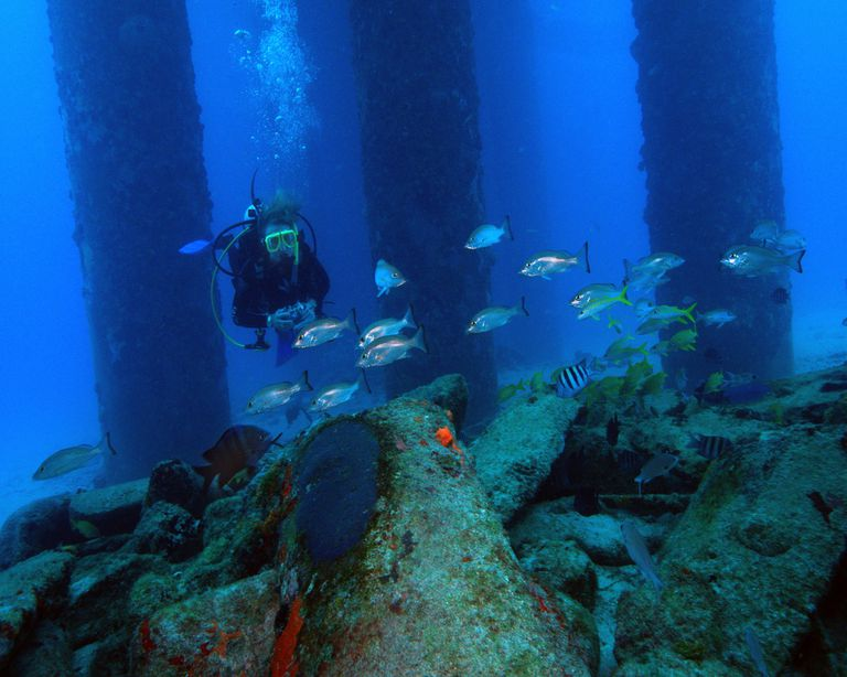 Diver underwater surrounded by fish