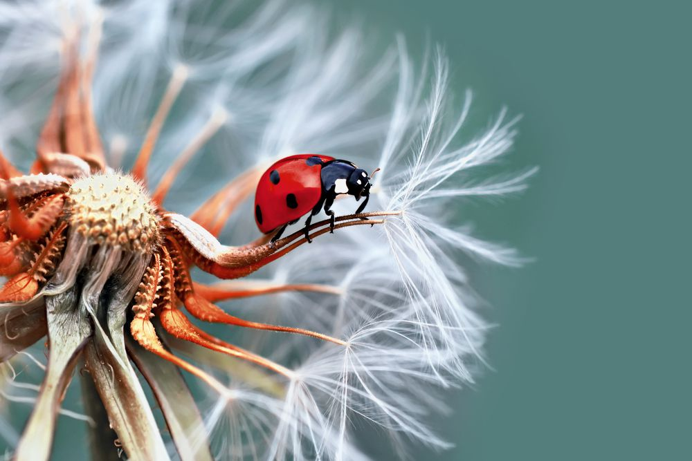 Red and black spotted ladybug on flower