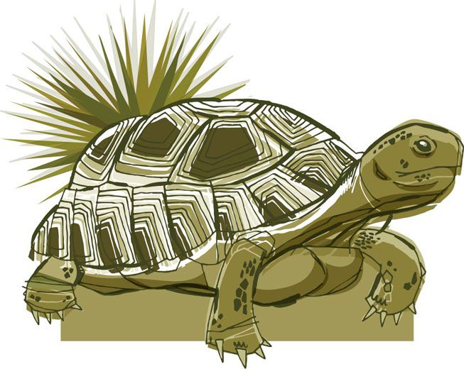 An illustration of a tortoise