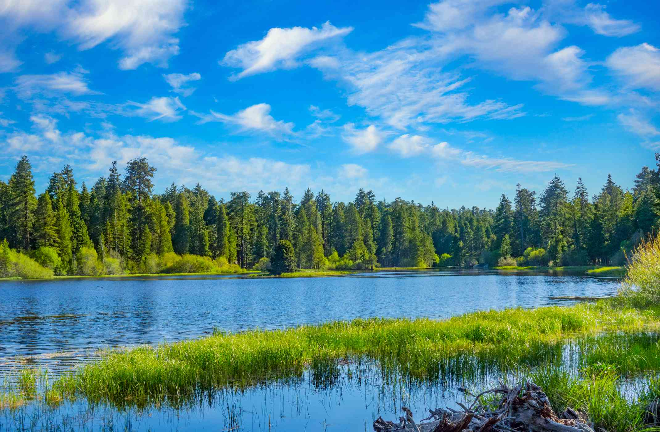 Bluff Lake surrounded by evergreen trees with blue sky overhead
