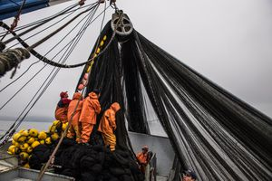 hauling nets in Chile