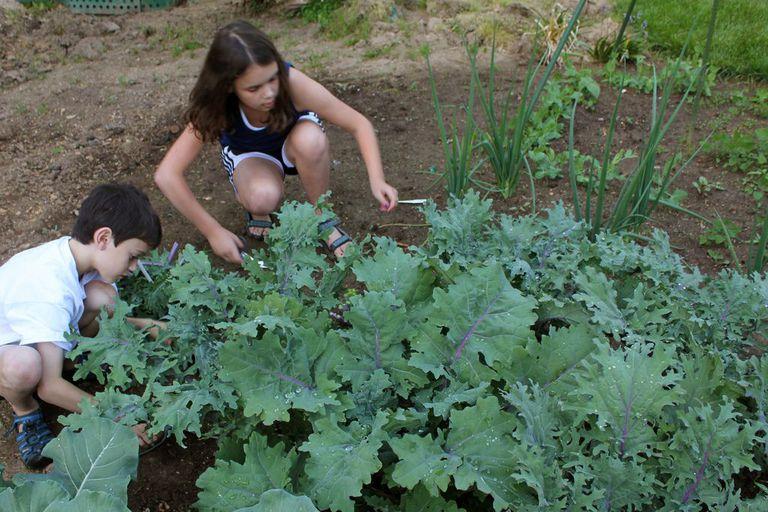Two children digging in a garden