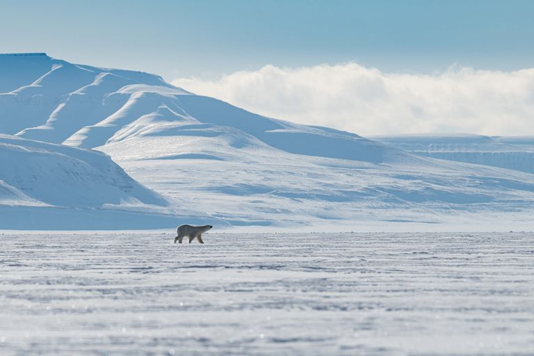 A polar bear walking along a flat surface covered with sea ice with a snow-covered mountain in the background and a blue sky and low,white clouds above