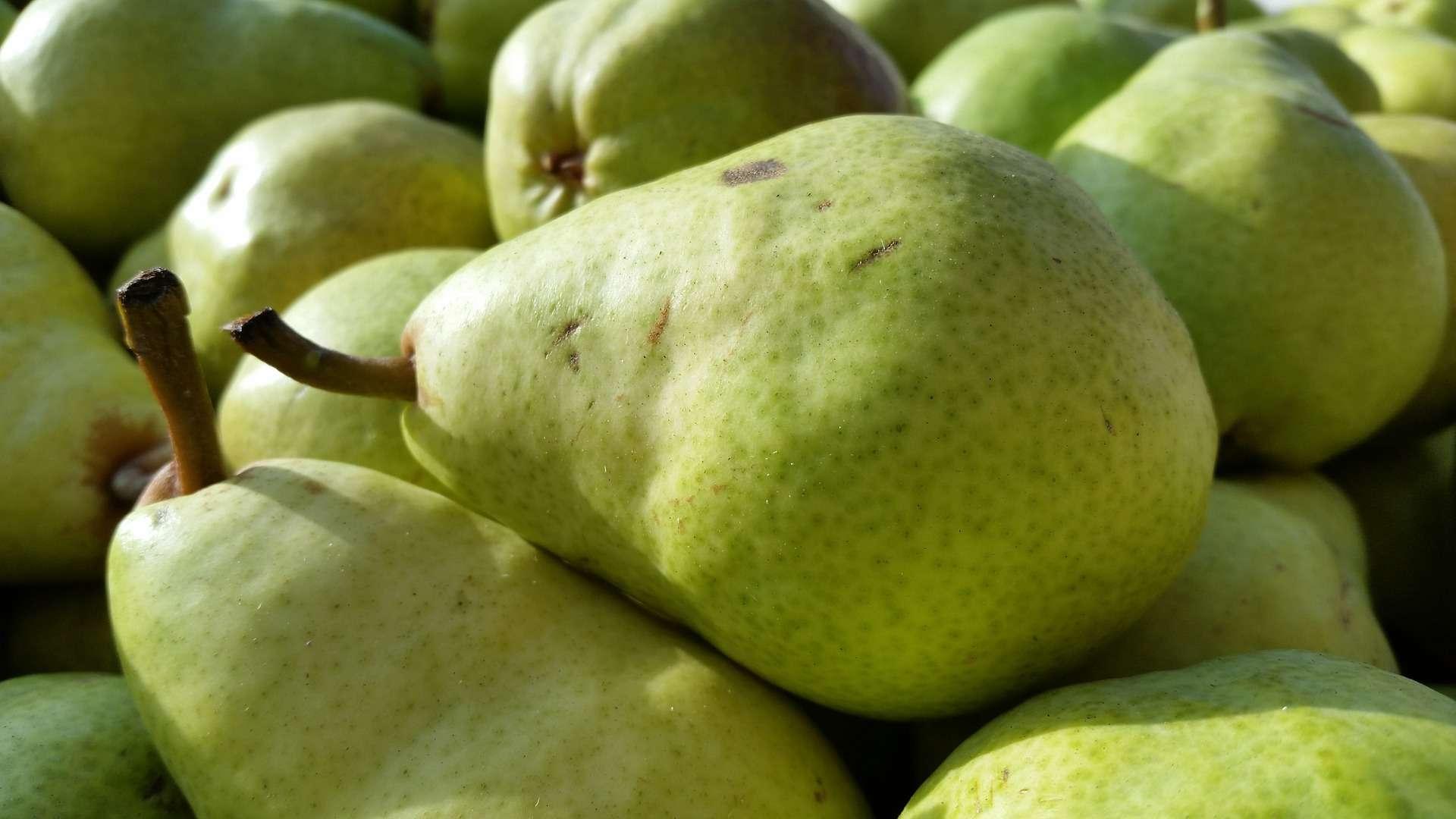 Green pile of Bartlett pears