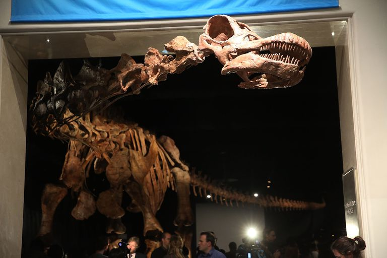 Museum Of Natural History Holds Media Preview Of New 122-Foot Dinosaur Exhibit