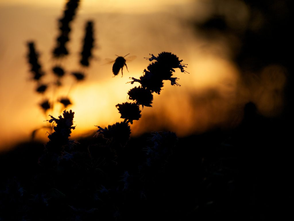 Insecticides can weaken native pollinators like bees, raising concerns about food supplies.