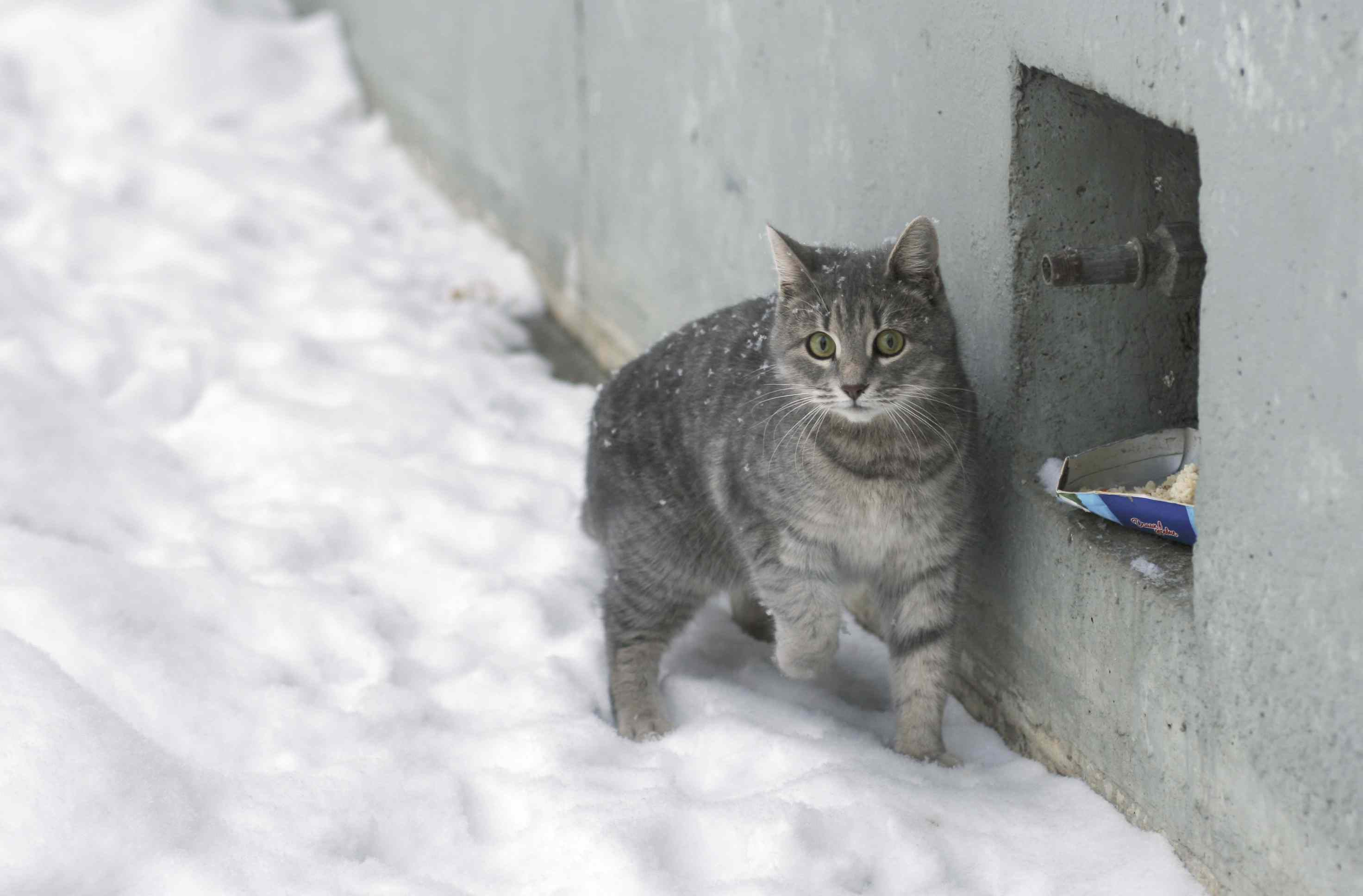 How to Care for Feral Cats During the Winter
