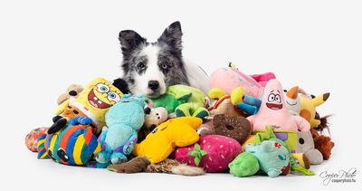 Max and his toys