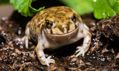 frog upclose