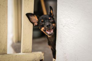 'Puppy Laugh'