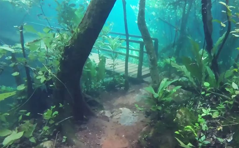 Raro inundación deja el sendero de la jungla sumergido en agua cristalina