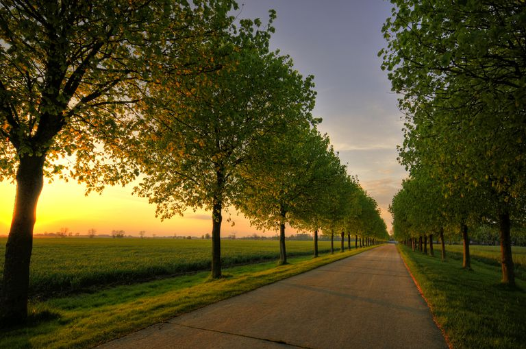A long tree-lined path