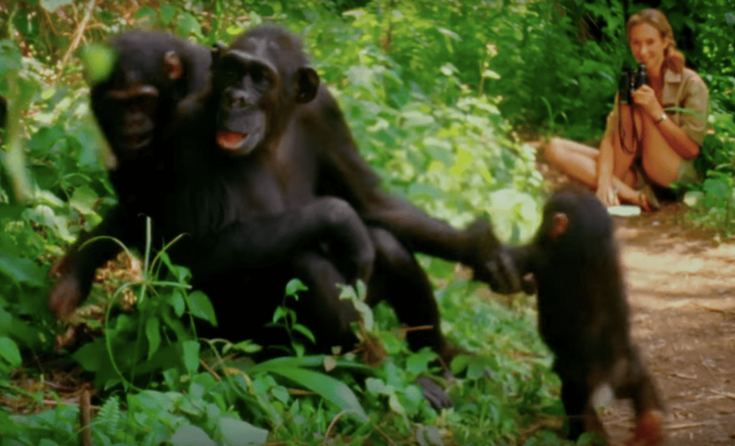 A still from the Jane Goodall documentary of the scientist observing chimps.