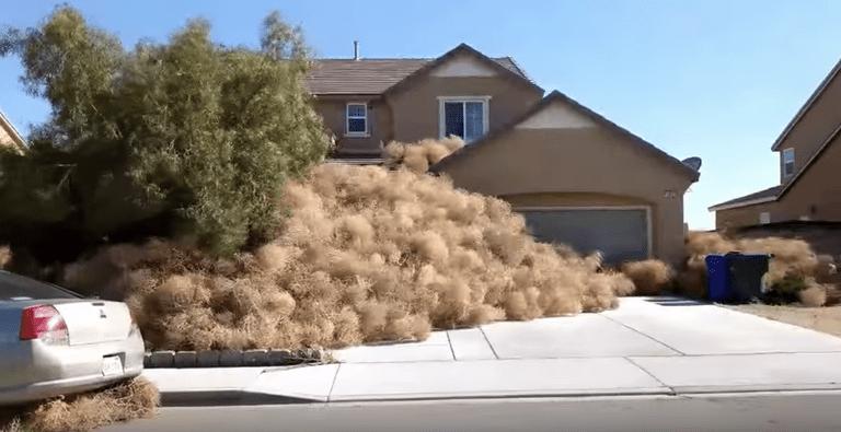 Tumbleweed Blitz provoca pánico y aumenta la ira en la ciudad de California