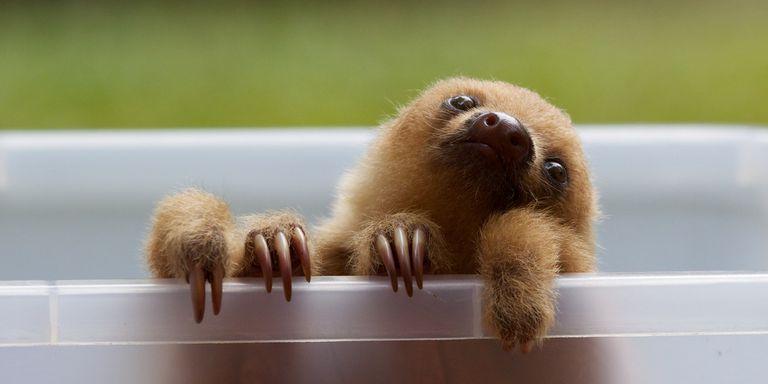 25 Fotos de animales bebés inusuales
