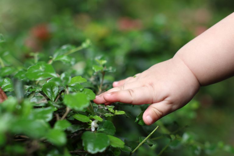 A baby's hand touching plants outdoors.