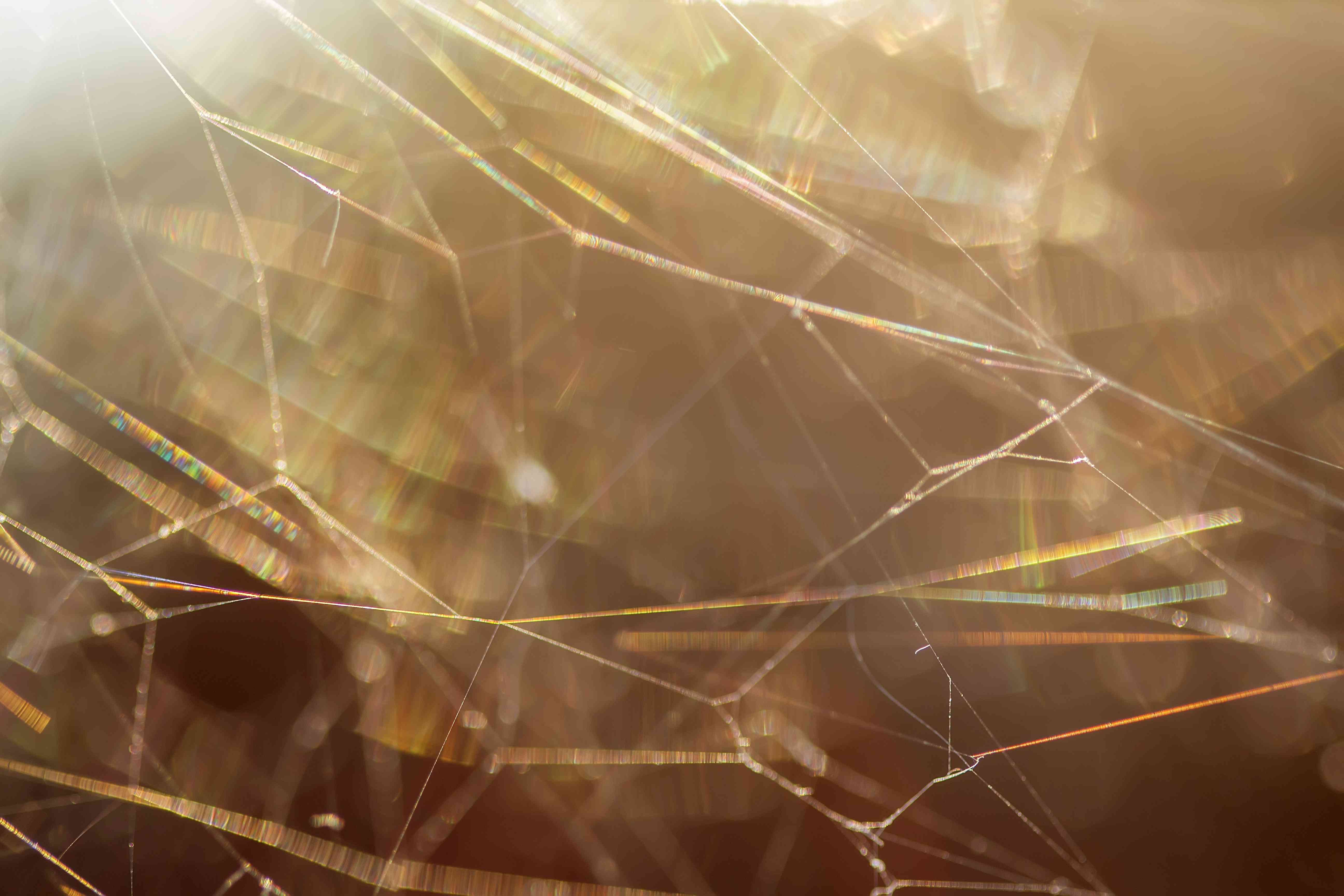 cobwebs can serve as transition homes for house spiders