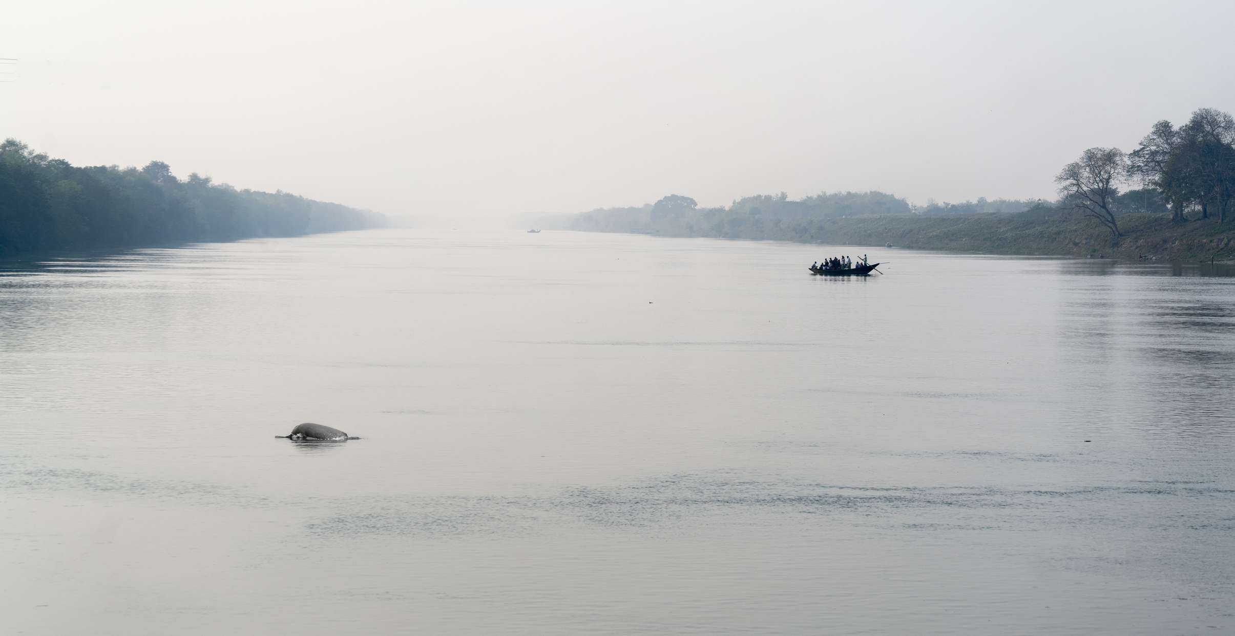 Ganges river dolphin and a boat carrying people crossing Ganges river