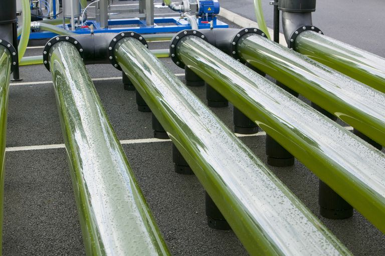 An AlgaeLink growing system harvests algae to make ethanol and biodiesel