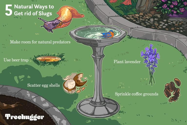 5 ways to get rid of slugs