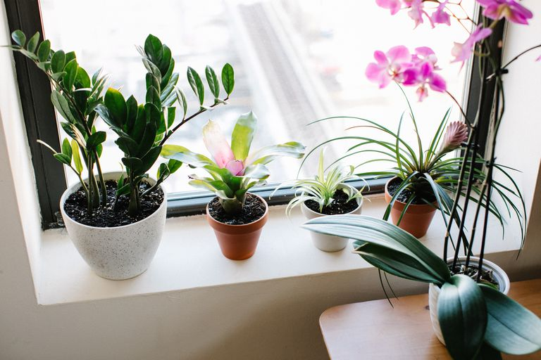 Houseplants on a windowsill that are good for wellbeing
