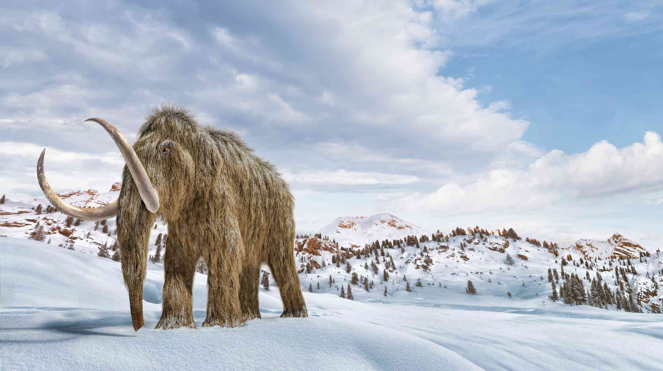 Woolly mammoth in snow, illustration
