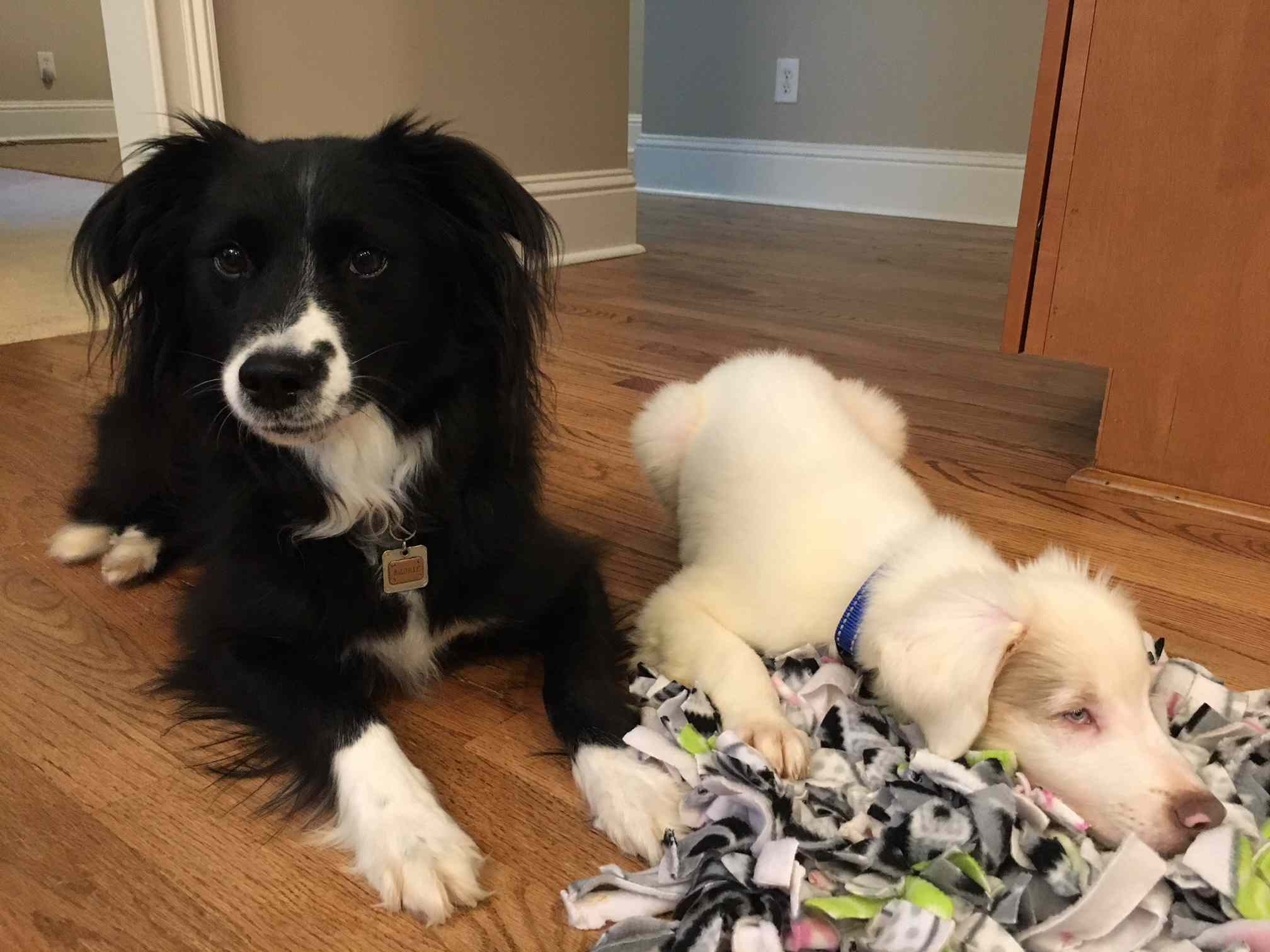 blind puppy and adult dog with snuffle mat