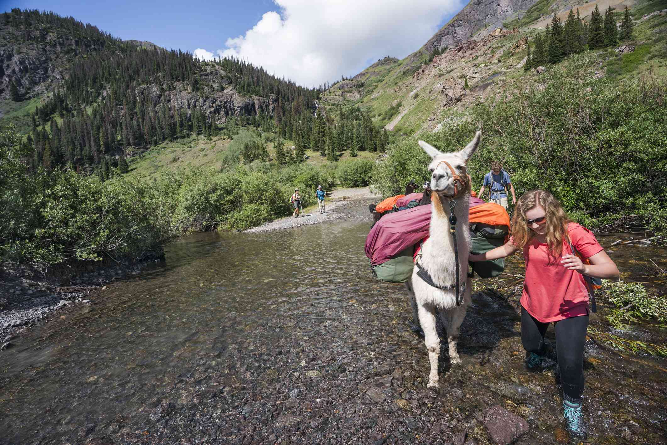 A woman crossing a stream with a llama carrying goods.