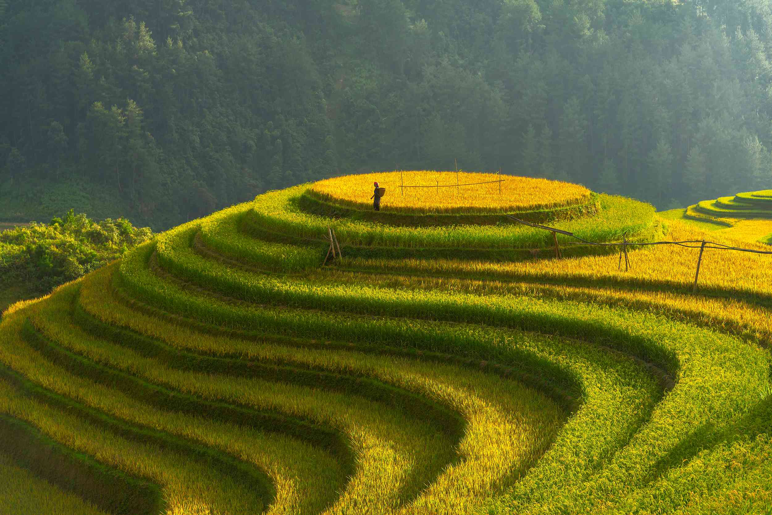 Contour rice farming in Yên Bái Province, Vietnam.