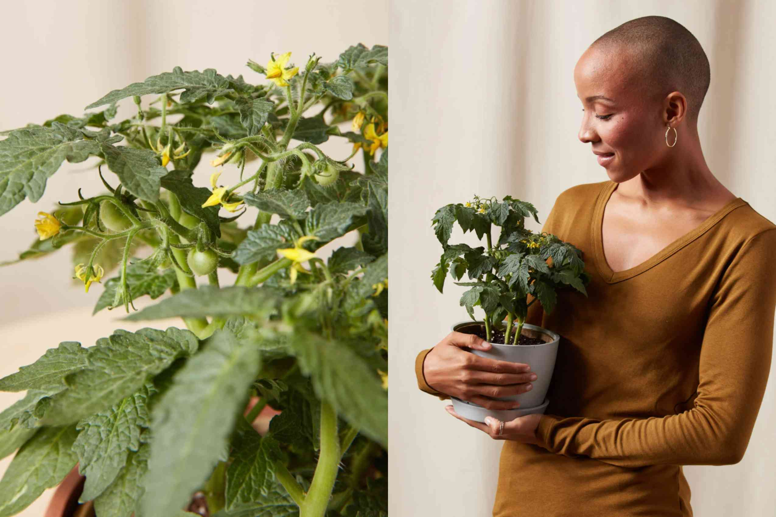 A woman cradles a potted tomato plant in her arms.