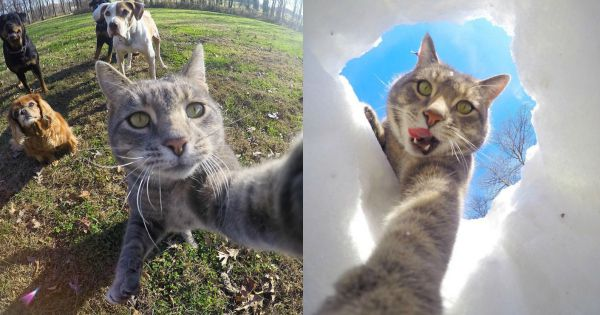 El juego de selfies de este gato está a punto