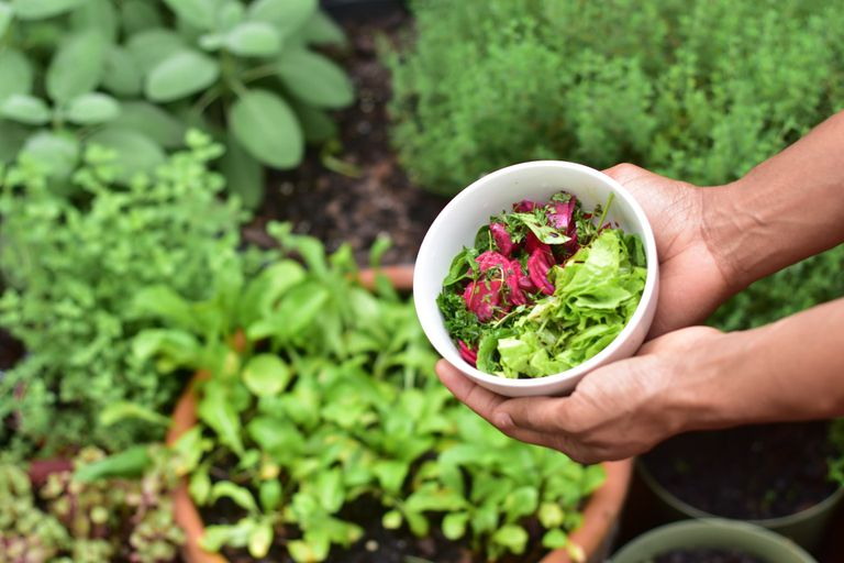 Man's hands holding a bowl of fresh greens and radish with garden in the background