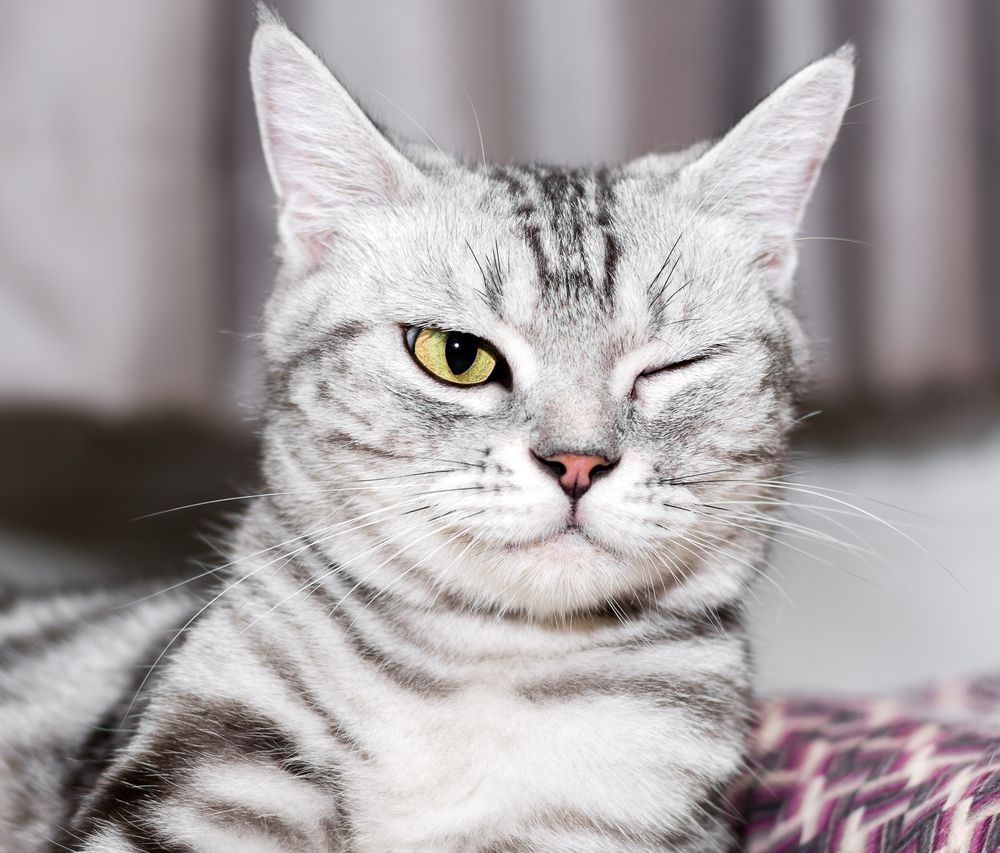cat with one eye open