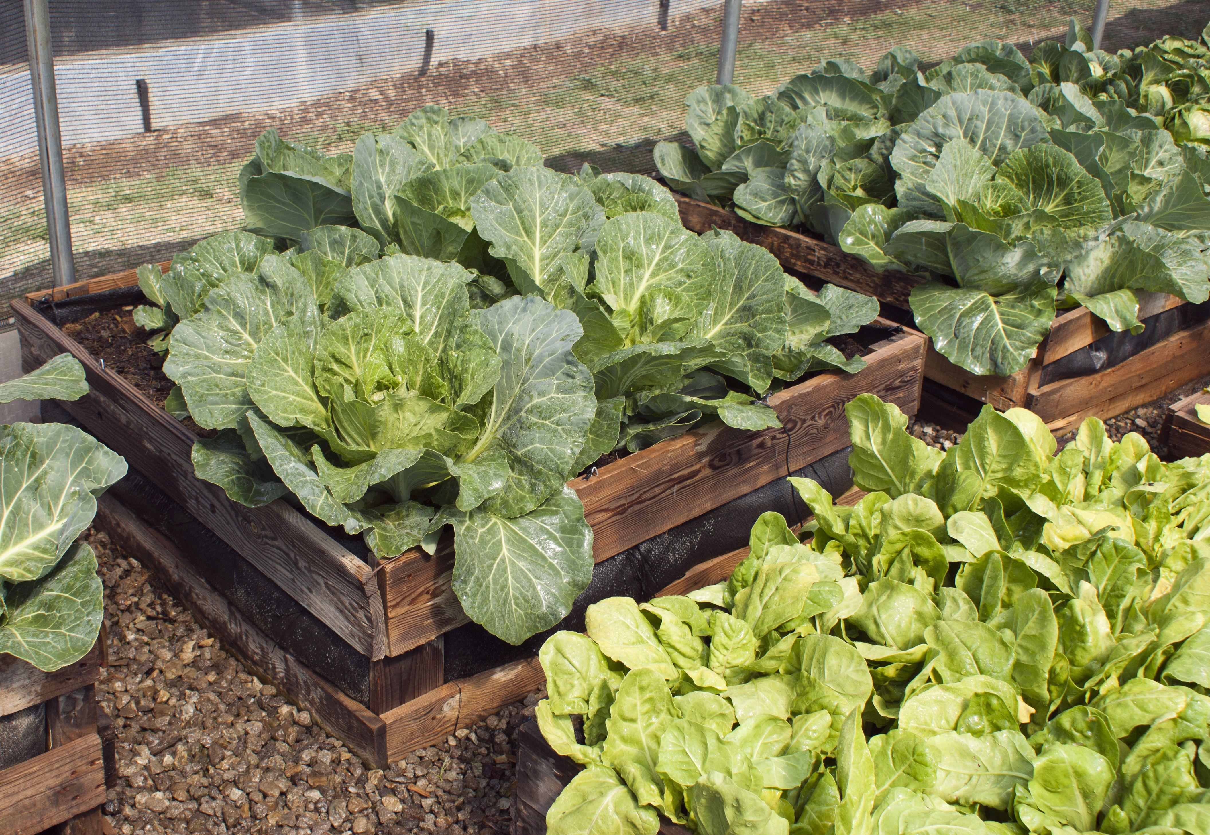 5 Inspiring Examples of Zero Waste Gardening
