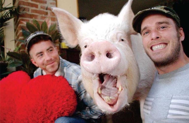 El cerdo más famoso del mundo ahora está libre de cáncer, y su escáner CT único está salvando vidas