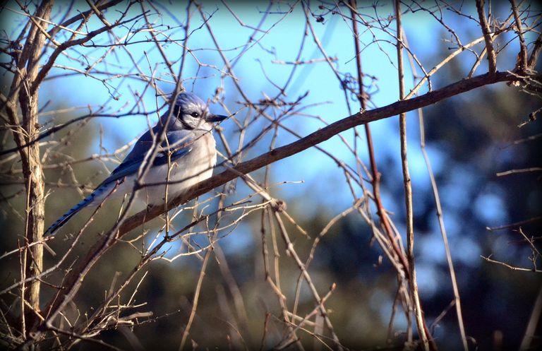 Los pesticidas populares también están matando pájaros