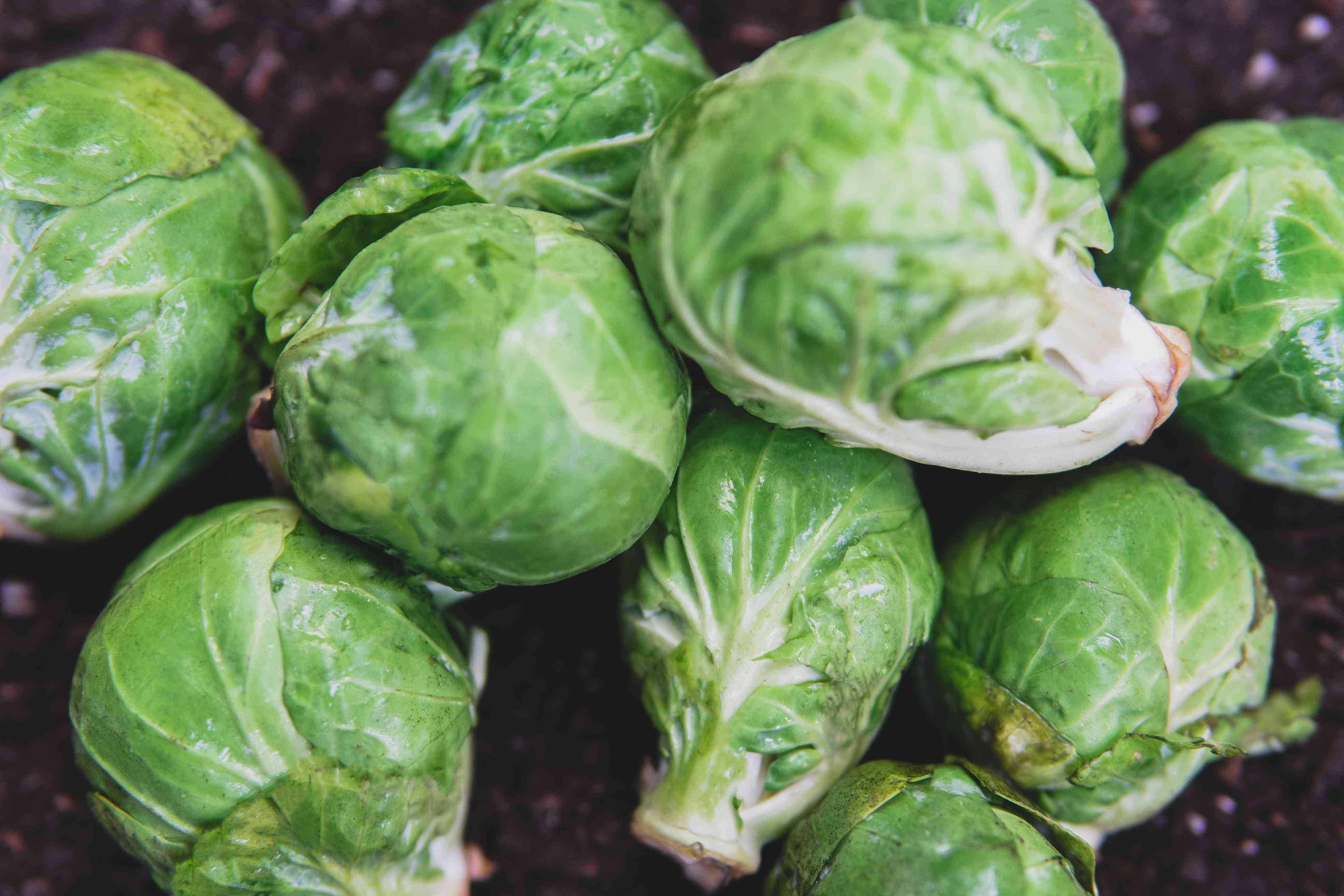Several green brussels sprouts laying on brown dirt.