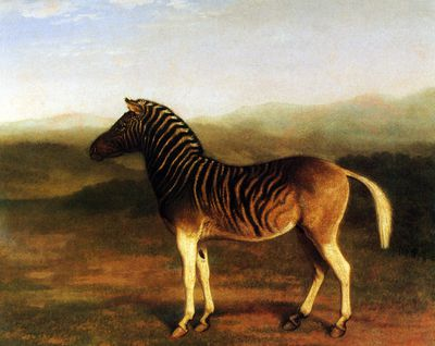 Color painting of a male quagga from Africa standing in an open field with a blue sky in the distance