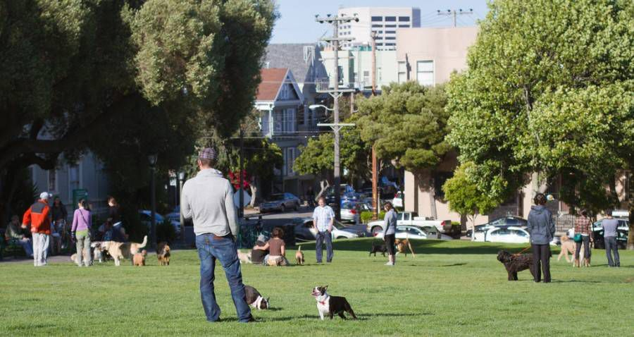 dogs and humans at a dog park