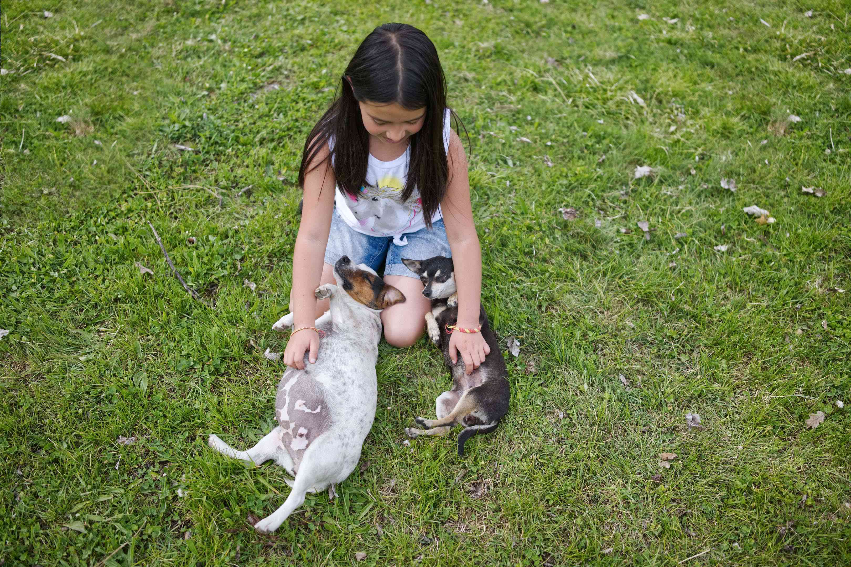 little girl pets two chihuahua mixes on their belly as they lay on their backs in green grass