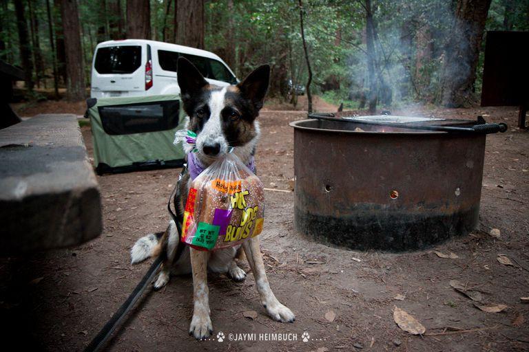 Consejos para acampar: cómo disfrutar del aire libre con su perro
