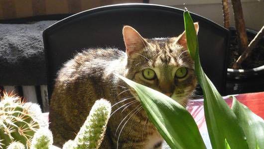 ¿Qué plantas son tóxicas para los gatos?