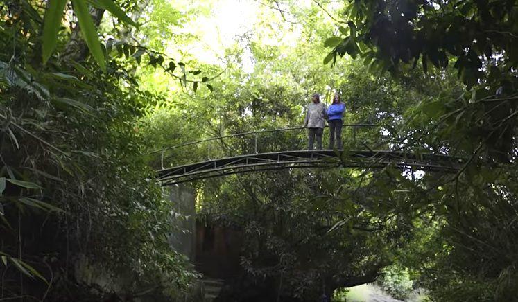 La pareja que consiguió que 300 acres de tierras de cultivo yermas regresaran a un bosque frondoso