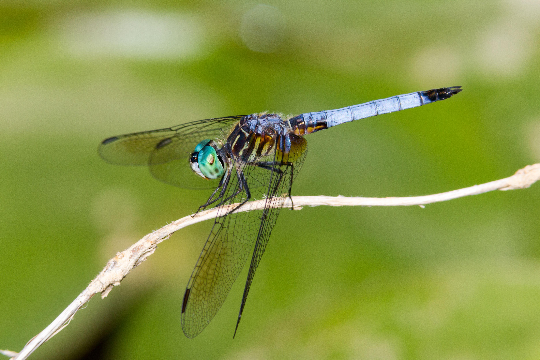 How to Create a Dragonfly Garden