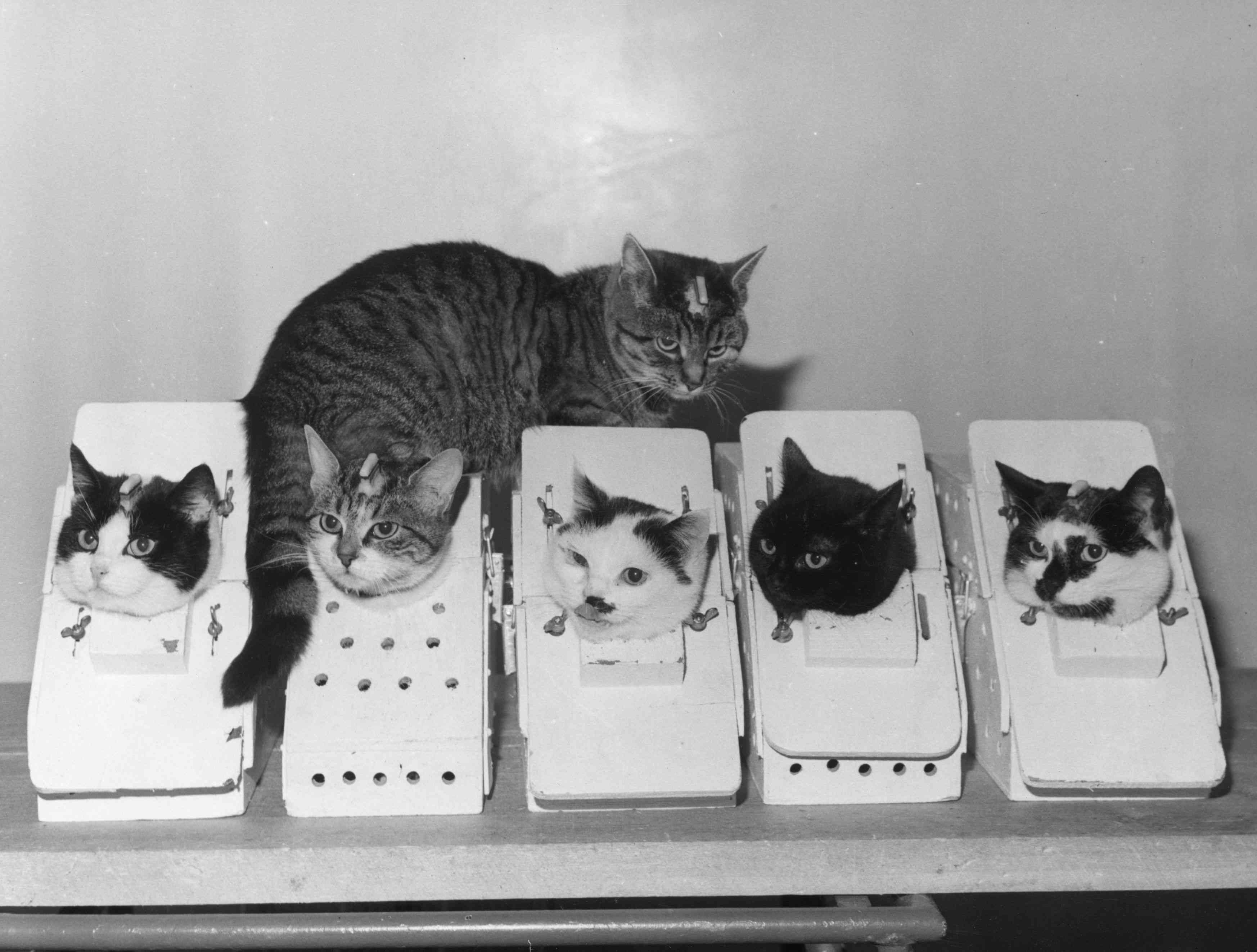 space cats train in boxes in france