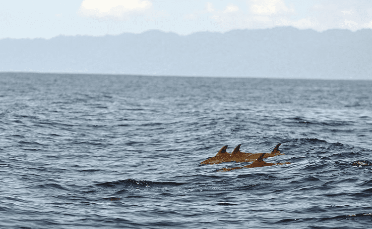 Dolphins off the Osa Peninsula, Costa Rica