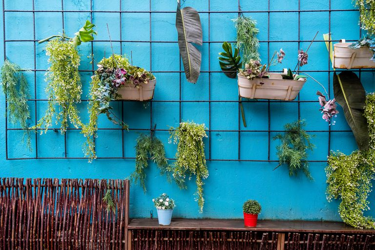 Hanging houseplants on a wall
