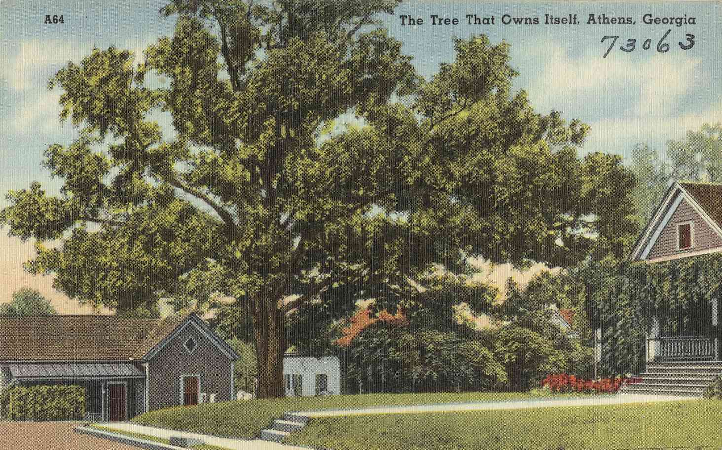 Postcard with an illustration of the tree that owns itself and surrounding buildings